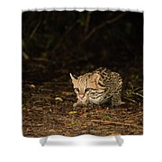 Ocelot Crouching At Night Looking For Food Shower Curtain