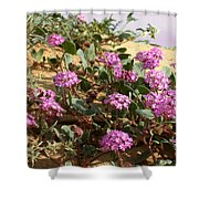 Ocotilla Wells Pink Flowers 2 Shower Curtain
