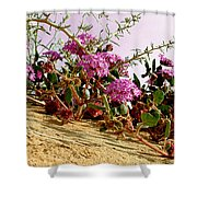 Ocotillo Wilds Shower Curtain