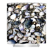 Ocracoke Shells Shower Curtain