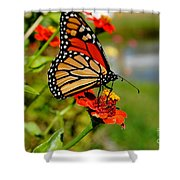 October Butterfly Shower Curtain
