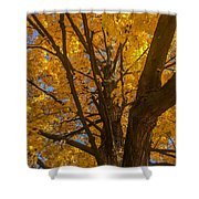 October Day Shower Curtain