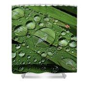 Drops Of Rain Shower Curtain
