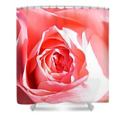 October Rose Close Up Shower Curtain