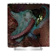 Octopus On Night Dive Shower Curtain