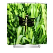 Odanate With Wings Spread Shower Curtain