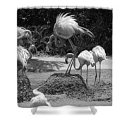 Odd Bird Out In Black And White Shower Curtain