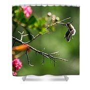 Odd Pose - Hummingbird Shower Curtain