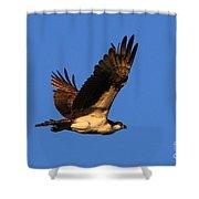 Osprey Flying By Shower Curtain