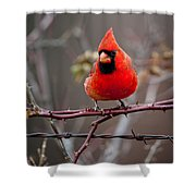 Of Barbs And Thorns Shower Curtain
