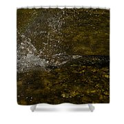 Of Fishes And Rainbows - Wild Salmon Run In The Creek Shower Curtain