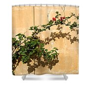 Of Light And Shadow - Bougainvillea On A Timeworn Plaster Wall Shower Curtain