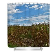 Of The Corn  Shower Curtain