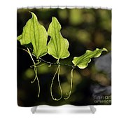 Of Veins And Tendrils Shower Curtain