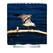 Off You Gull Shower Curtain
