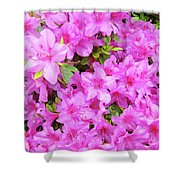 Office Art Azaleas Flower Art Prints 1 Azalea Flowers Giclee Baslee Troutman Shower Curtain