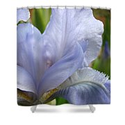 Office Art Blue Iris Flower Floral Giclee Baslee Troutman Shower Curtain
