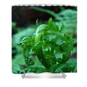 Office Art Fern Fround Forest Ferns Art Prints Baslee Troutman Shower Curtain