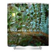 Office Art Fern Green Forest Ferns Giclee Prints Baslee Troutman Shower Curtain