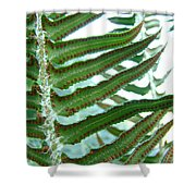 Office Art Ferns Green Forest Fern Giclee Prints Baslee Troutman Shower Curtain