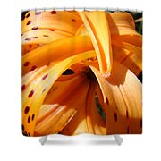 Office Art Floral Artwork Orange Tiger Lily Baslee Troutman Shower Curtain