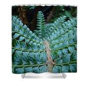 Office Art Forest Ferns Green Fern Giclee Prints Baslee Troutman Shower Curtain