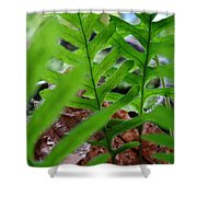 Office Art Forest Ferns Green Fern Giclee Prints Baslee Troutman Shower Curtain