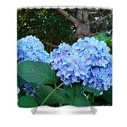 Office Art Hydrangea Flowers Blue Giclee Prints Floral Baslee Troutman Shower Curtain