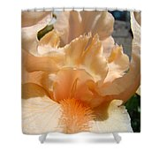 Office Art Irises Flower Orange Iris Flower Giclee Art Prints Baslee Troutman Shower Curtain