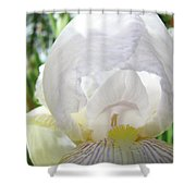 Office Art Irises White Iris Flower Floral Giclee Prints Baslee Troutman Shower Curtain
