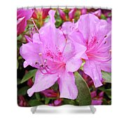 Office Art Pink Azalea Flower Garden 3 Giclee Art Prints Baslee Troutman Shower Curtain