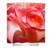 Office Art Pink Rose Spiral Roses Giclee Prints Baslee Troutman Shower Curtain