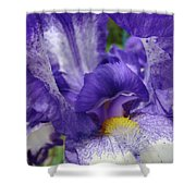Office Art Prints Iris Flowers Purple White Irises 40 Giclee Prints Baslee Troutman Shower Curtain