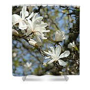 Office Art Prints Magnolia Tree Flowers Landscape 15 Giclee Prints Baslee Troutman Shower Curtain