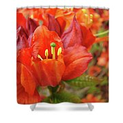 Office Art Prints Orange Azalea Flowers 20 Giclee Prints Baslee Troutman Shower Curtain