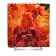 Office Art Prints Orange Azaleas Flowers 9 Giclee Prints Baslee Troutman Shower Curtain