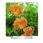 Office Art Prints Tiger Lilies Flowers Nature Giclee Prints Baslee Troutman Shower Curtain