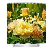 Office Art Rose Garden Giclee Prints Roses Baslee Troutman Shower Curtain