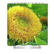 Office Art Sunflower Sun Flowers Giclee Baslee Troutman Shower Curtain