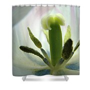 Office Art Tulip Flower Art Prints Tulips Giclee Baslee Troutman Shower Curtain
