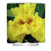 Office Art Yellow Iris Flower Irises Giclee Prints Baslee Troutman Shower Curtain