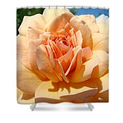 Office Artwork Roses Peach Rose Flower Giclee Baslee Troutman Shower Curtain