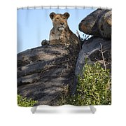 Oh So Regal Shower Curtain