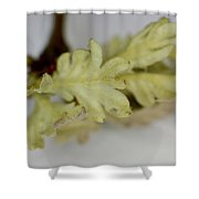 Oh So Small Oak Leaves Shower Curtain