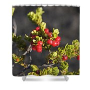Ohelo Berries Shower Curtain