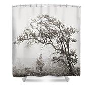 Ohia Lehua Tree Shower Curtain