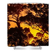 Ohia Trees At Sunset Shower Curtain