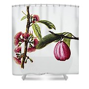 Ohiaai Shower Curtain