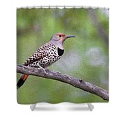 Oil Painted Northern Flicker Shower Curtain