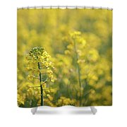 Oilseed Rape Shower Curtain